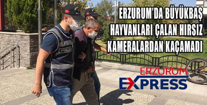 Erzurum'da hayvan hırsızlığına karışan zanlı yakalandı