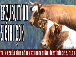 Erzurum sığır üretiminde ikinci il oldu