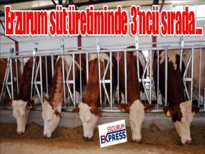 Erzurum süt üretiminde 3'ncü sırada...