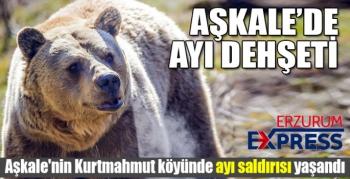 Aşkale'de ayı saldırısı