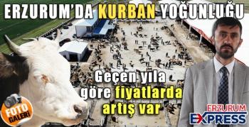 Erzurum'da kurbanlıklar görücüye çıktı