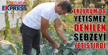 Erzurum'da yetişmez denilen sebzeyi 2 bin rakımda yetiştirdi