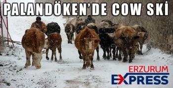 PALANDÖKEN'DE COW SKİ