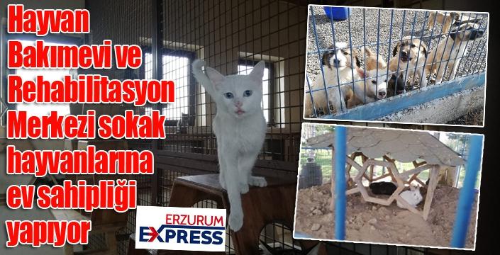 Hayvan Bakımevi ve Rehabilitasyon Merkezi sokak hayvanlarına ev sahipliği yapıyor
