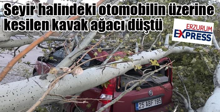 Seyir halindeki otomobilin üzerine kesilen kavak ağacı düştü